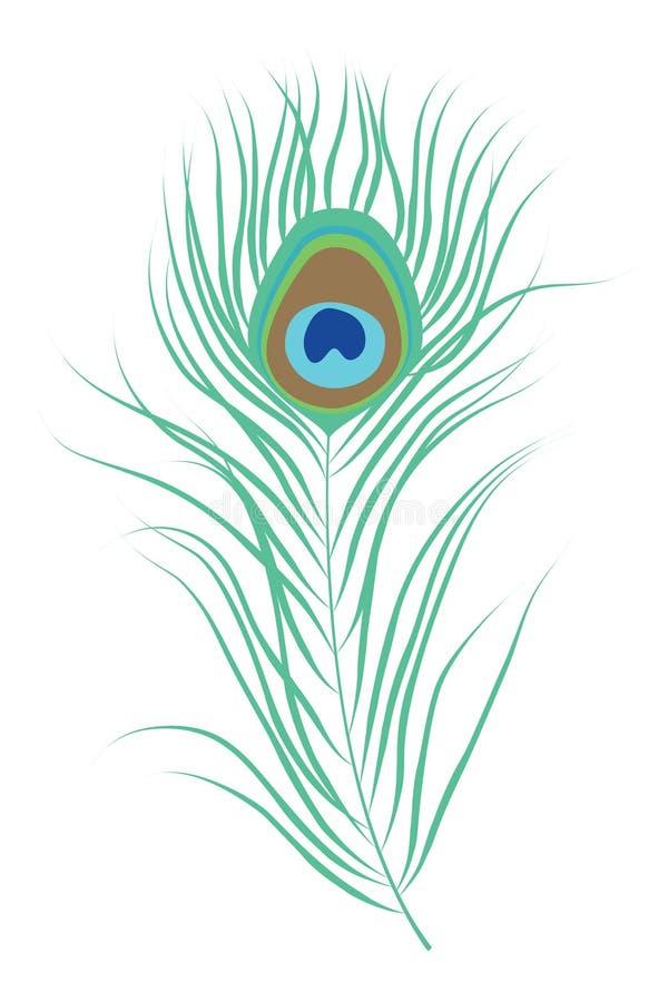 Ejemplo aislado pluma del vector del pavo real stock de ilustración