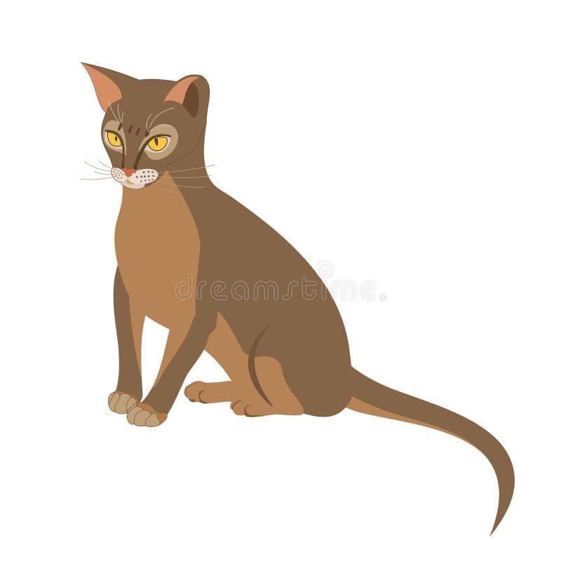 Ejemplo aislado vector abisinio del gato Retrato ascendente cercano de sentar el gato femenino abisinio azul libre illustration