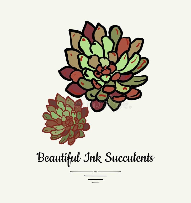 Ejemplo aislado vector suculento exhausto de la mano de Echeveria Logotipo suculento de la planta de la tinta moderna, icono, car stock de ilustración