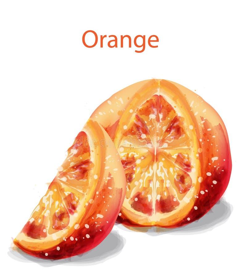 Ejemplo anaranjado de la acuarela del vector de las frutas de la rebanada aislado en blancos libre illustration