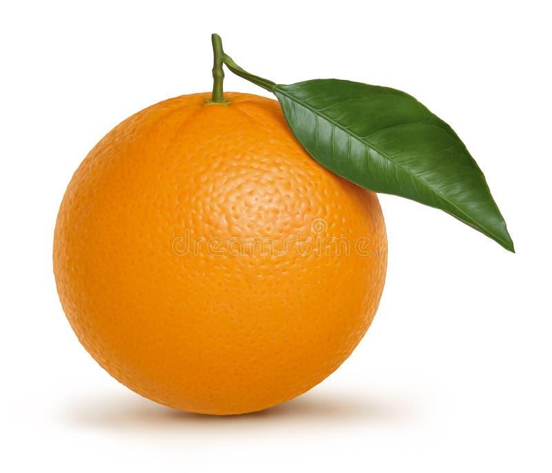 Ejemplo anaranjado de la fruta y de la hoja stock de ilustración
