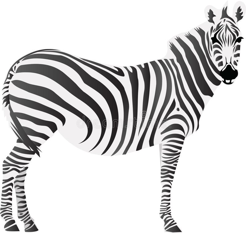 Ejemplo animal del icono y del vector de la cebra ilustración del vector