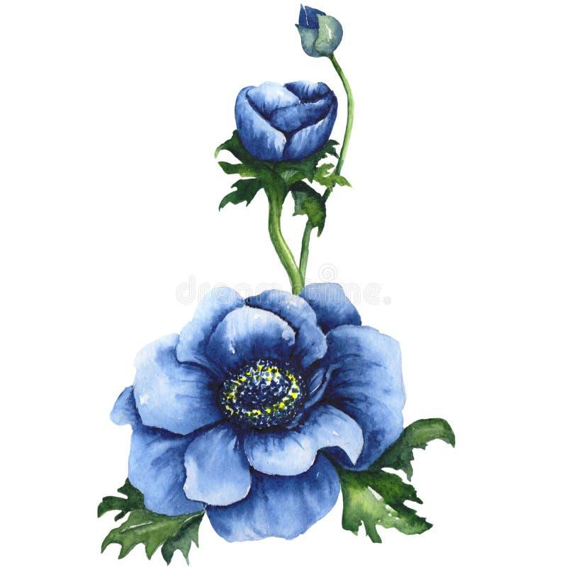 Ejemplo azul de la acuarela de Handdrawing de las anémonas para Autumn Design ilustración del vector