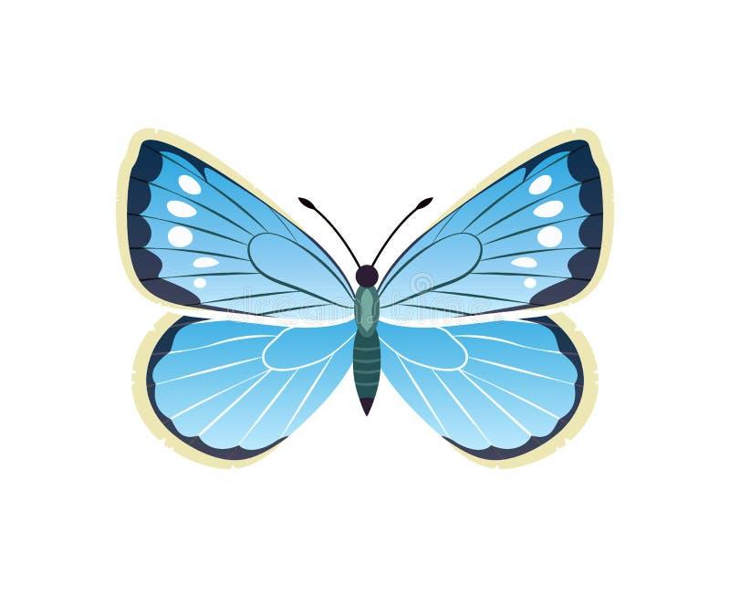 Ejemplo azul del vector de la mariposa de Morpho Peleides ilustración del vector