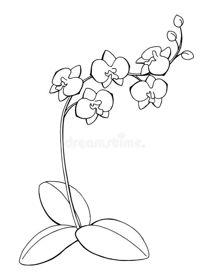 Ejemplo blanco del bosquejo del negro del arte gráfico de la flor de la orquídea stock de ilustración
