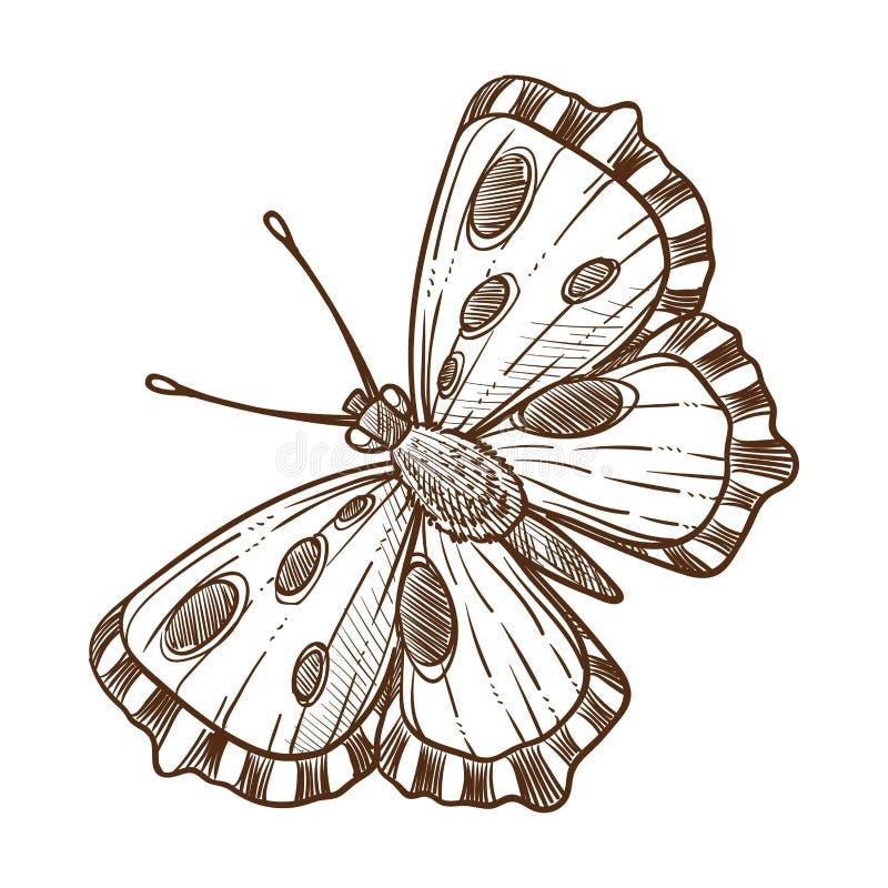 Ejemplo blanco del vector del esquema monocromático del bosquejo del insecto de la mariposa ilustración del vector