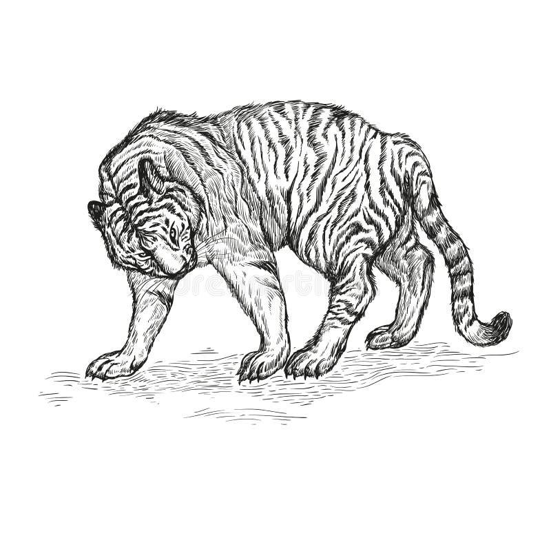 Ejemplo blanco y negro del vector del tigre ilustración del vector