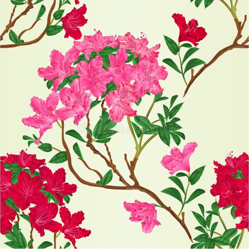 Ejemplo botánico del rododendro de la rama de la montaña del arbusto del vintage del vector rojo y rosado de la textura inconsúti stock de ilustración