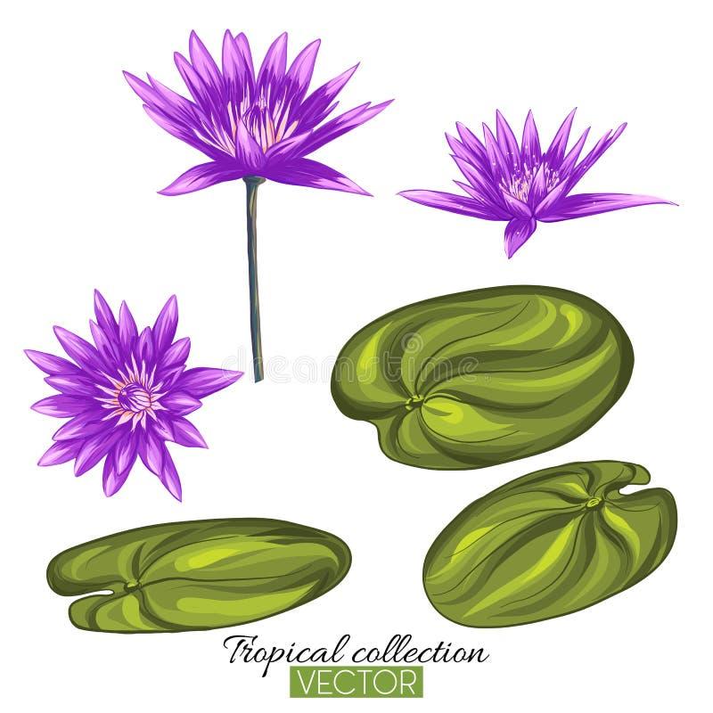 Ejemplo botánico dibujado mano hermosa del vector con el loto la Florida stock de ilustración