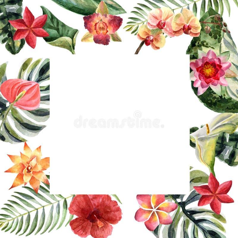 Ejemplo brillante del verano de la acuarela con las flores tropicales stock de ilustración