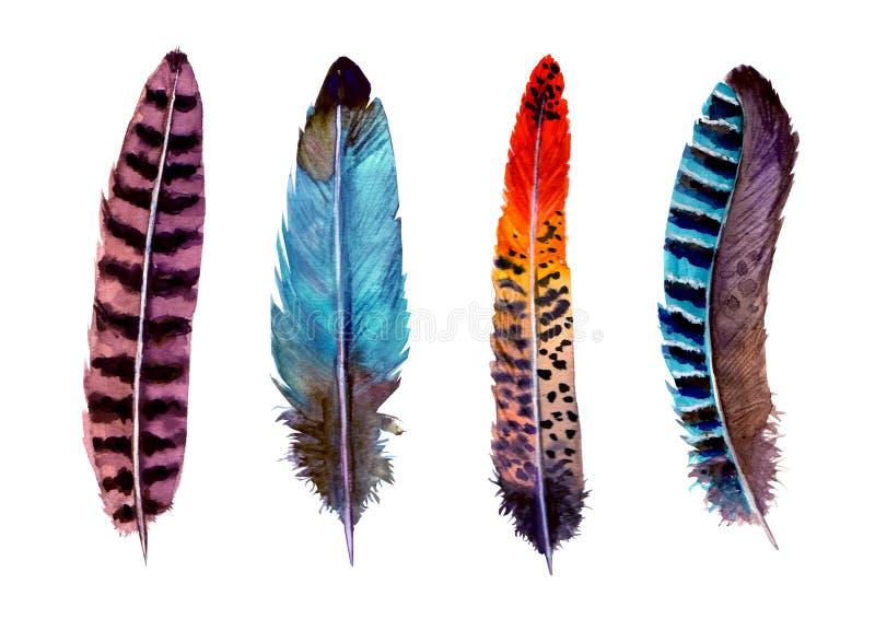 Ejemplo brillante del watercolour de la mano de pájaro de las plumas del estilo vibrante exhausto del boho ilustración del vector