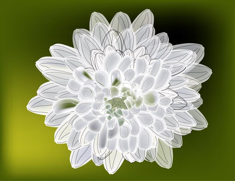 Ejemplo con el crisantemo en verde stock de ilustración