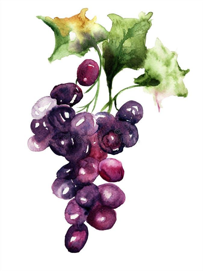 Ejemplo con el racimo de la uva libre illustration