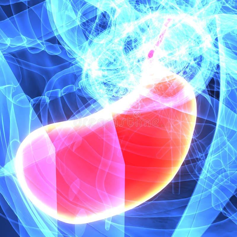 ejemplo 3d de la anatomía del estómago del cuerpo humano ilustración del vector