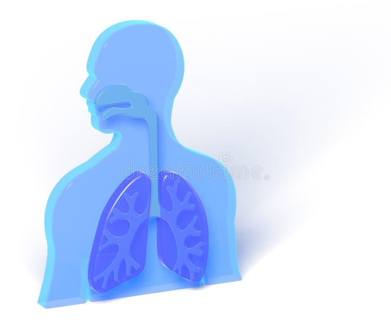 ejemplo 3D de la anatomía humana con los pulmones stock de ilustración