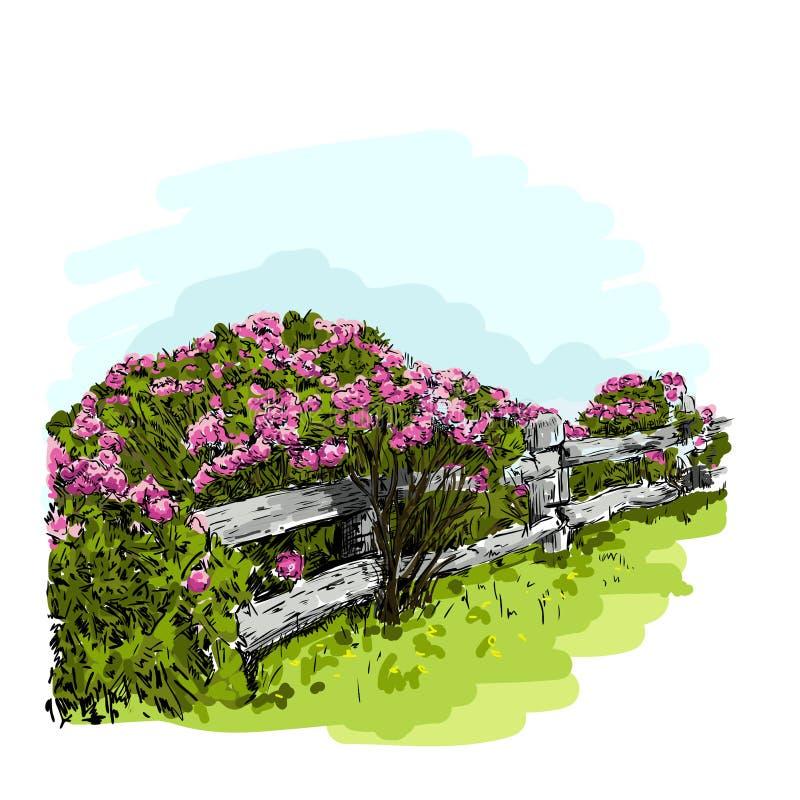 Ejemplo de Bush color de rosa detrás de una cerca, acuarela del vector ilustración del vector