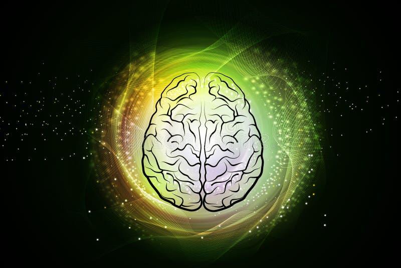 Ejemplo de Digitaces de la estructura del cerebro humano en fondo del color libre illustration