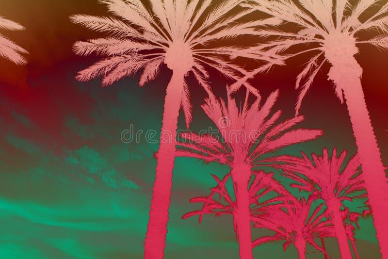 Ejemplo de Digitaces de las coronas de la palmera Imagen exótica del paisaje ilustración del vector
