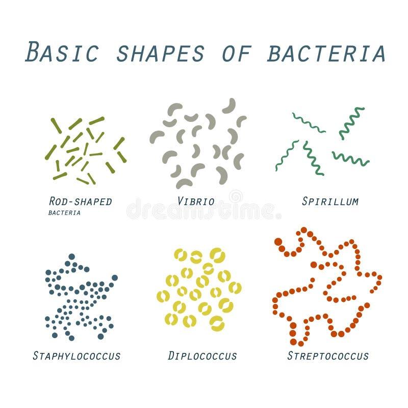 Ejemplo de formas básicas de bacterias en diseño plano ilustración del vector