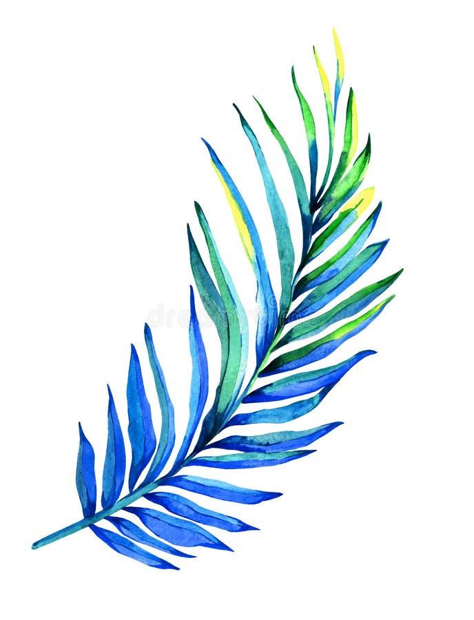 Ejemplo de hoja de palma libre illustration