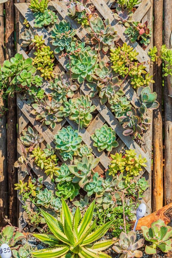 Ejemplo de jardinería vertical utilizando un trellis foto de archivo