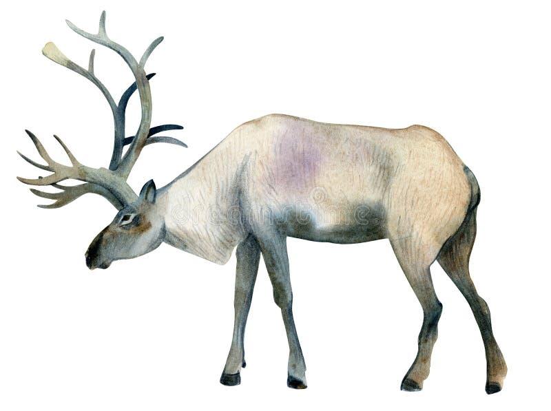 Ejemplo de la acuarela aislado en el fondo blanco Un de marrón stock de ilustración