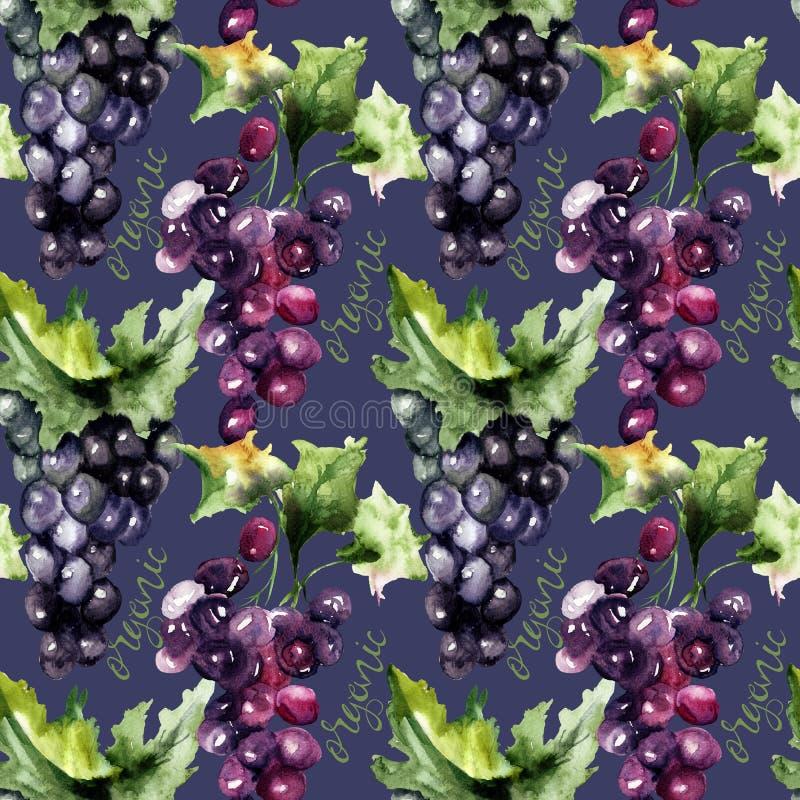 Ejemplo de la acuarela con el racimo de la uva libre illustration