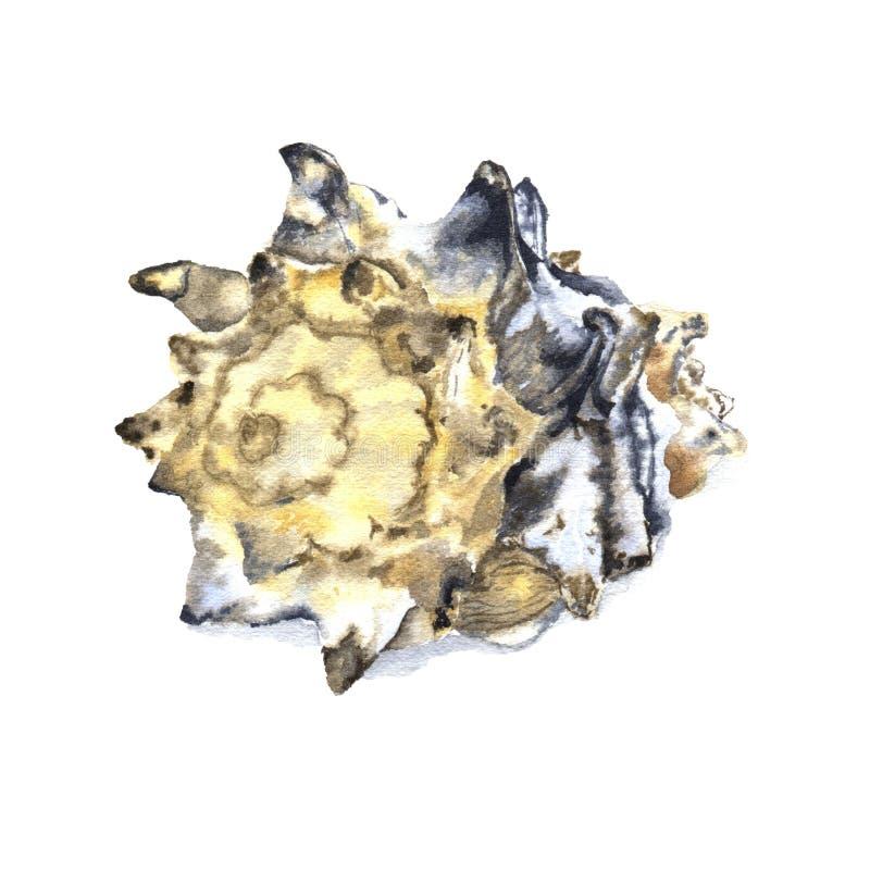 Ejemplo de la acuarela de conchas marinas stock de ilustración