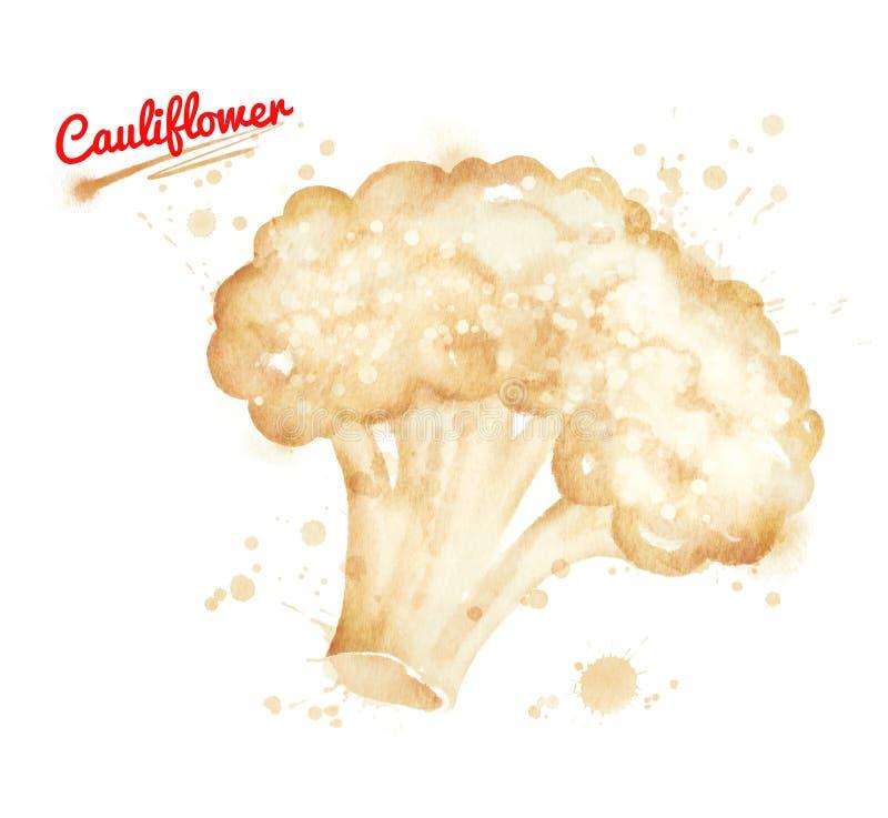 Ejemplo de la acuarela de la coliflor libre illustration