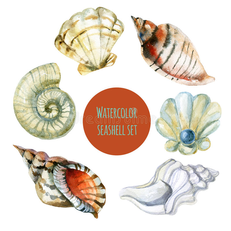 Ejemplo de la acuarela de la concha marina libre illustration