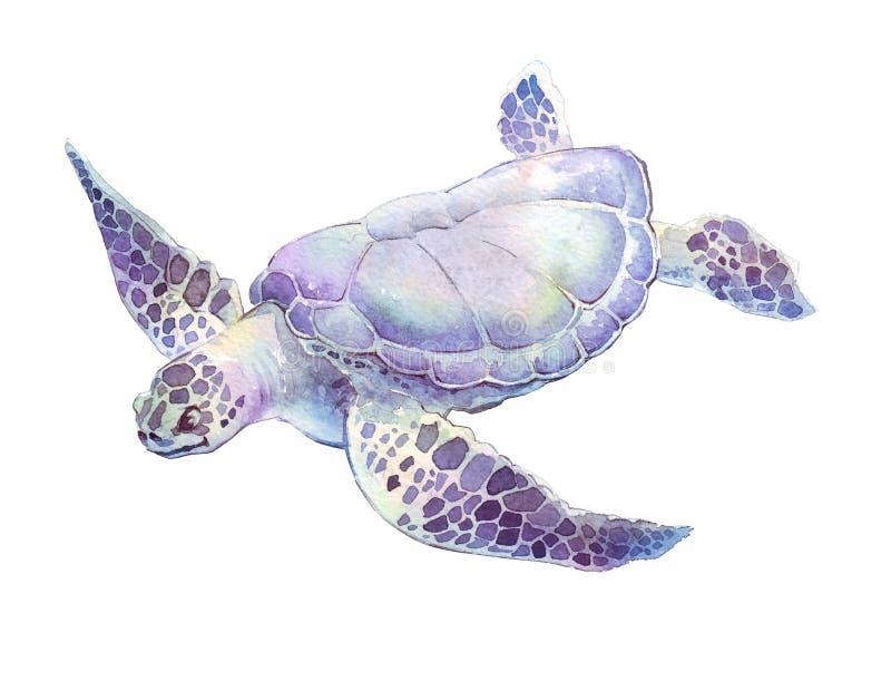 Ejemplo de la acuarela de la tortuga de la natación fotos de archivo