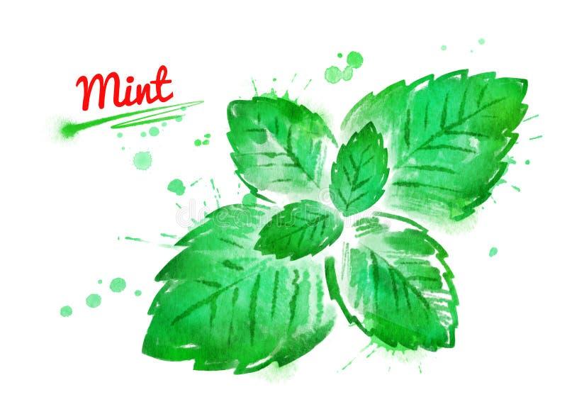 Ejemplo de la acuarela de las hojas de menta stock de ilustración