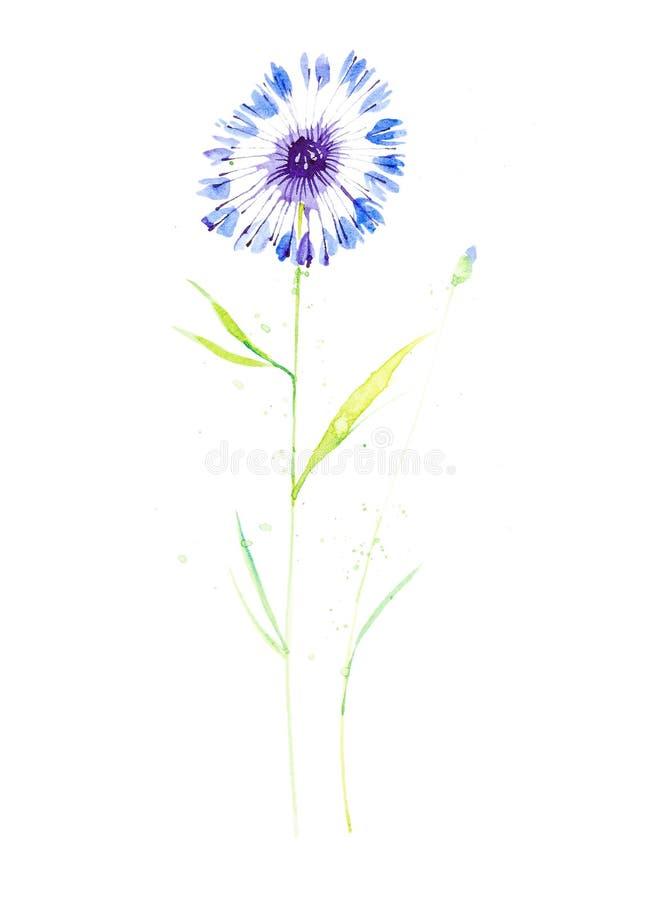 Ejemplo de la acuarela del azul del aciano de las flores rodeado por descensos abstractos Aislado en el fondo blanco libre illustration