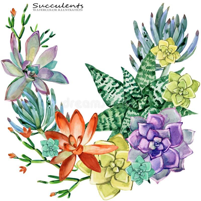 Ejemplo de la acuarela del drenaje de la mano de la planta de los Succulents ilustración del vector
