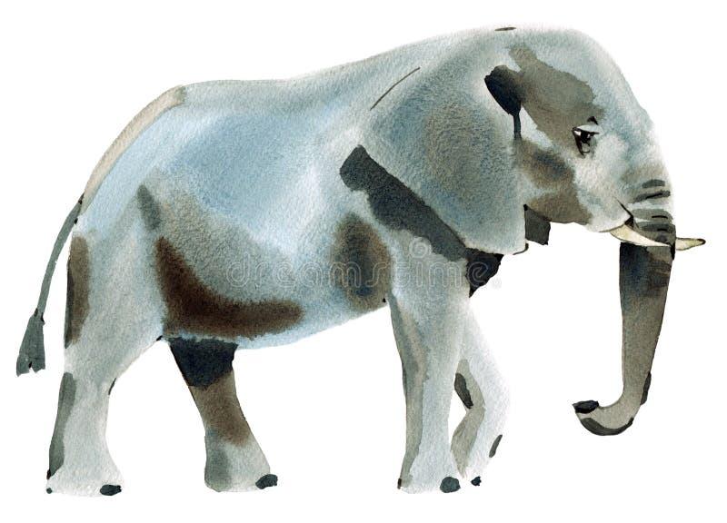 Ejemplo de la acuarela del elefante en el fondo blanco stock de ilustración