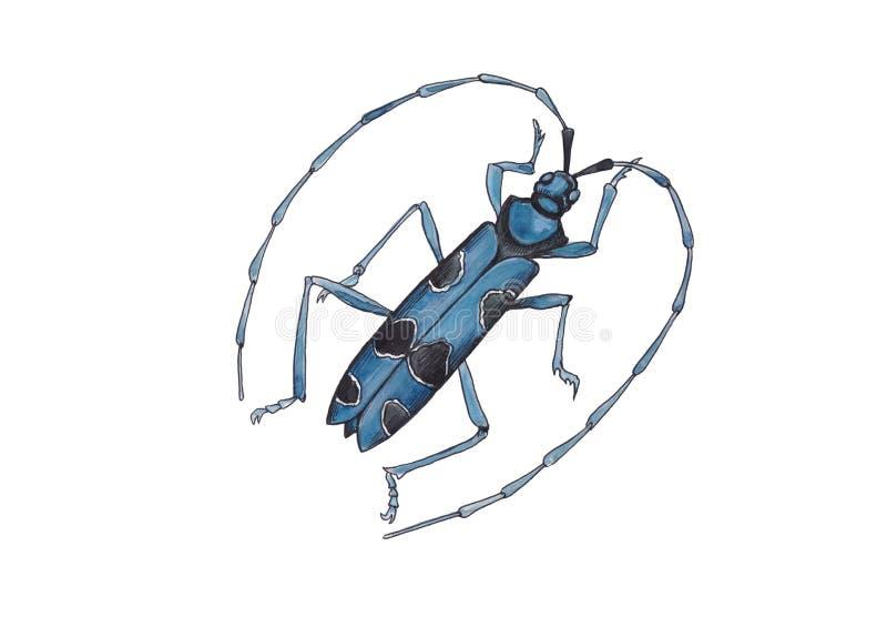 Ejemplo de la acuarela del escarabajo azul libre illustration