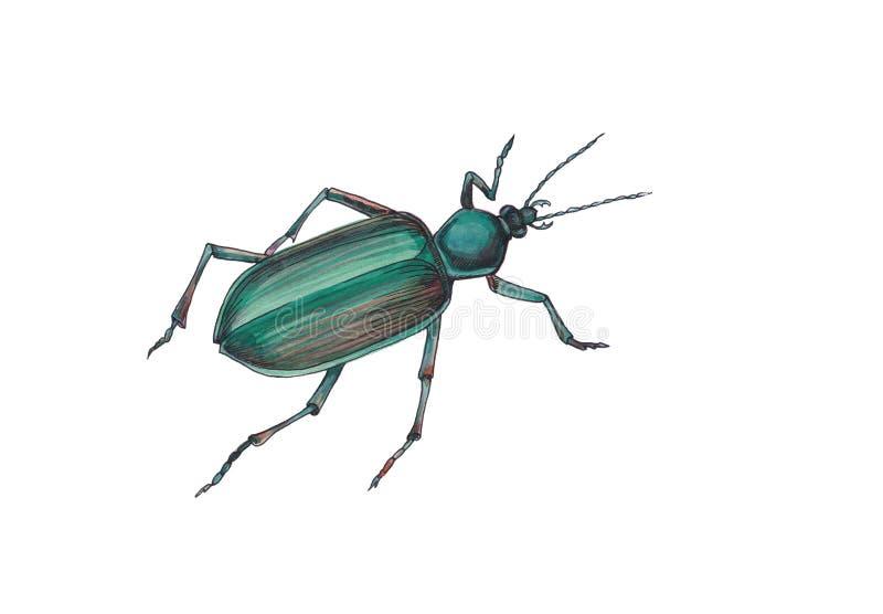 Ejemplo de la acuarela del escarabajo verde ilustración del vector