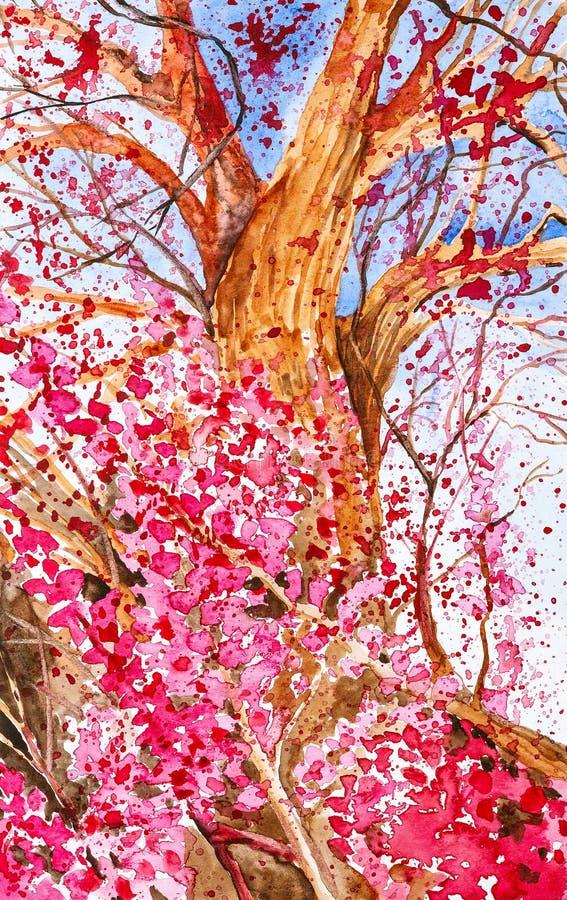Ejemplo de la acuarela del florecimiento de un árbol hermoso de Sakura con las flores rosadas El tiro de abajo hacia arriba y us stock de ilustración