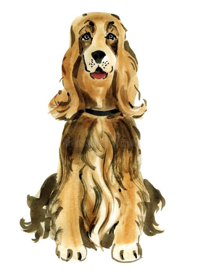 Ejemplo de la acuarela del inglés cocker spaniel del perro en el fondo blanco ilustración del vector