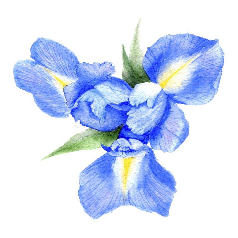 Ejemplo de la acuarela del iris ilustración del vector