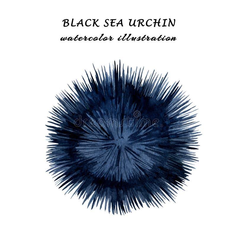 Ejemplo de la acuarela del pilluelo del Mar Negro aislado en el fondo blanco libre illustration