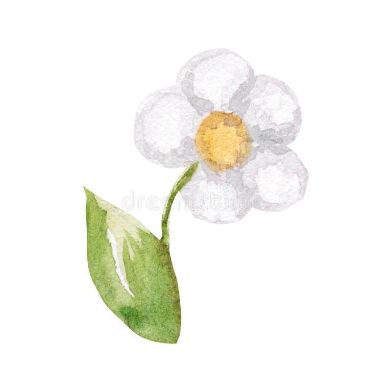 Ejemplo de la acuarela de la flor blanca con la hoja verde en el fondo blanco ilustración del vector