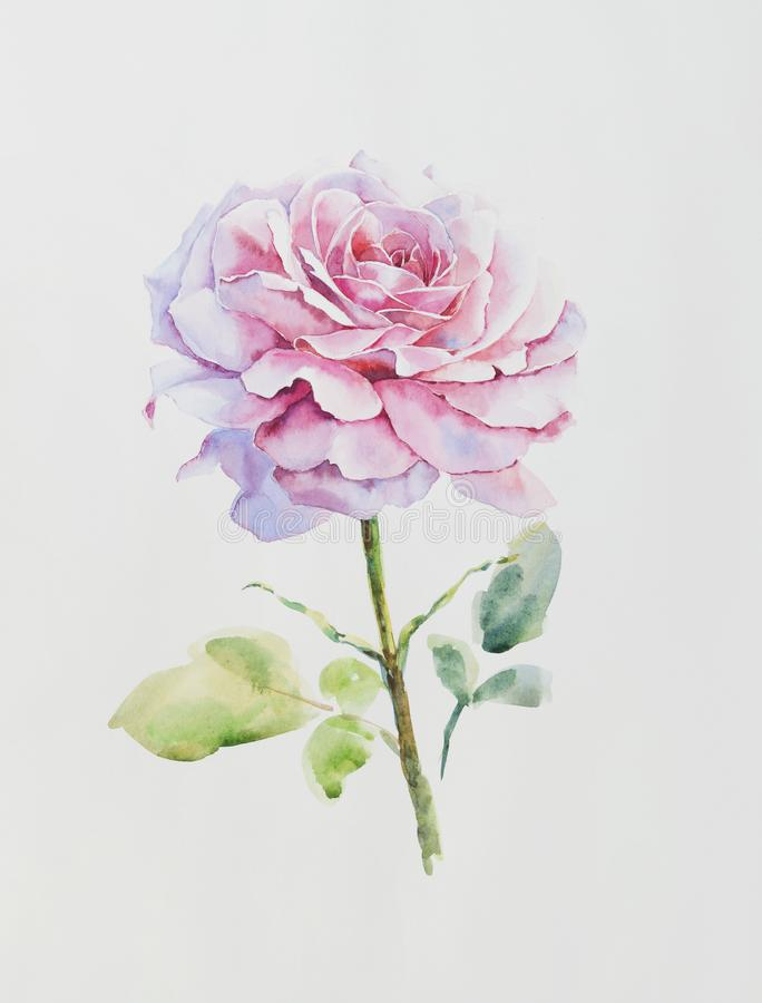 Ejemplo de la acuarela de la flor de la rosa del rosa libre illustration
