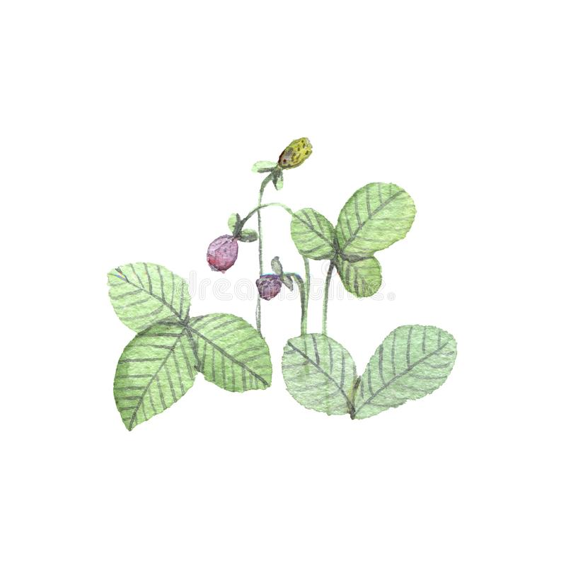 Ejemplo de la acuarela de fresas libre illustration
