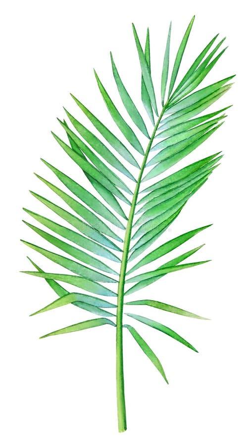 Ejemplo de la acuarela de la hoja de palma del coco imagen de archivo