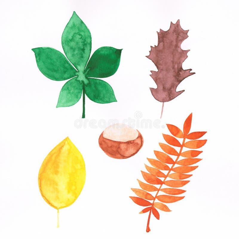 Ejemplo de la acuarela de hojas otoñales y de la castaña hechas a mano stock de ilustración