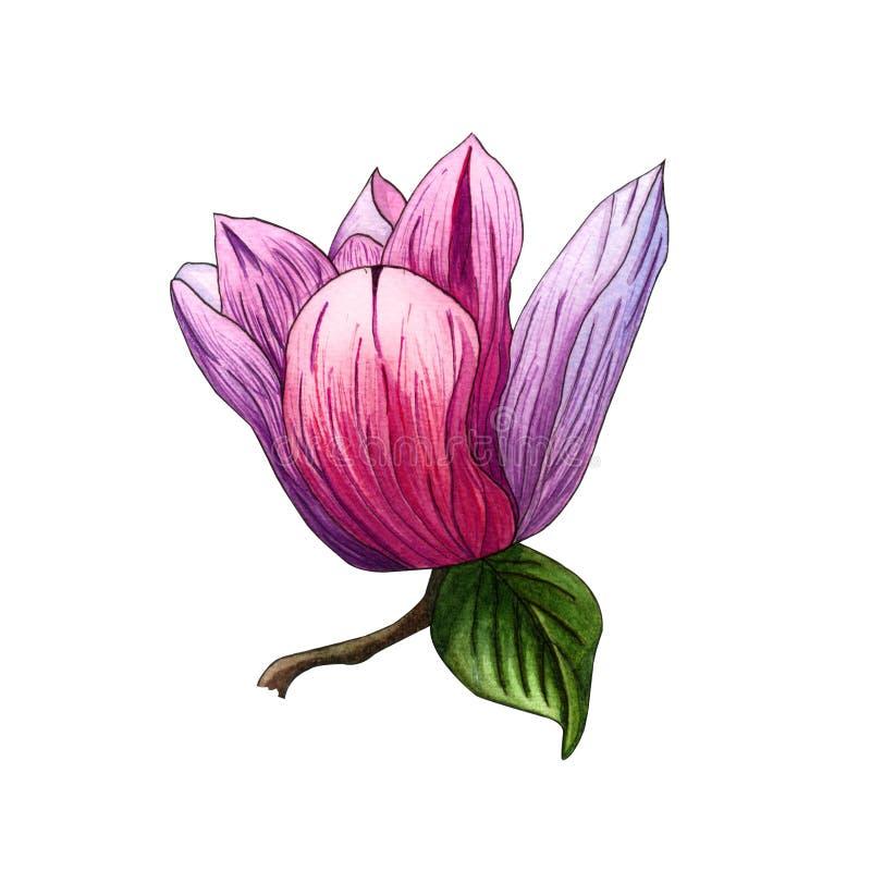 Ejemplo de la acuarela de las flores rosadas de la magnolia Rama de la magnolia con las flores y las hojas stock de ilustración