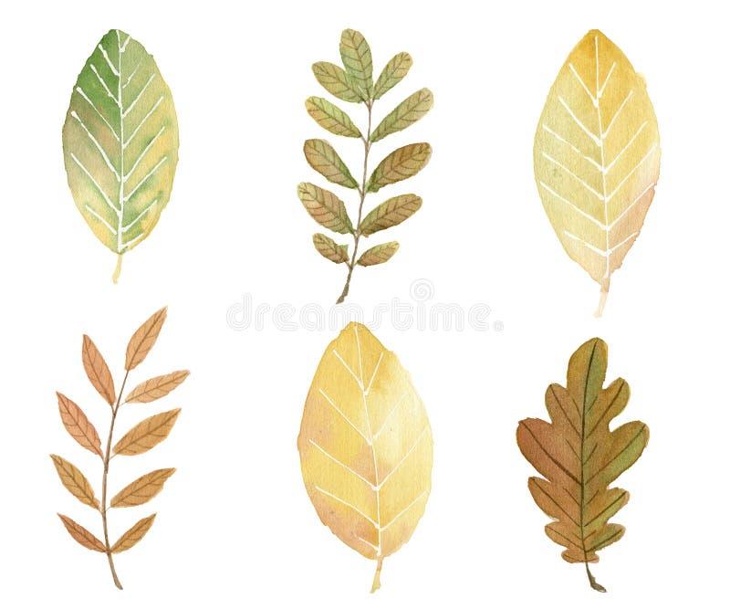 Ejemplo de la acuarela de las hojas de otoño ilustración del vector
