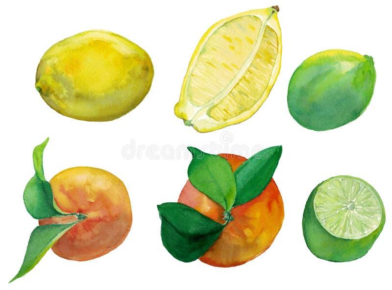 Ejemplo de la acuarela de los agrios frescos limón, cal y naranja ilustración del vector