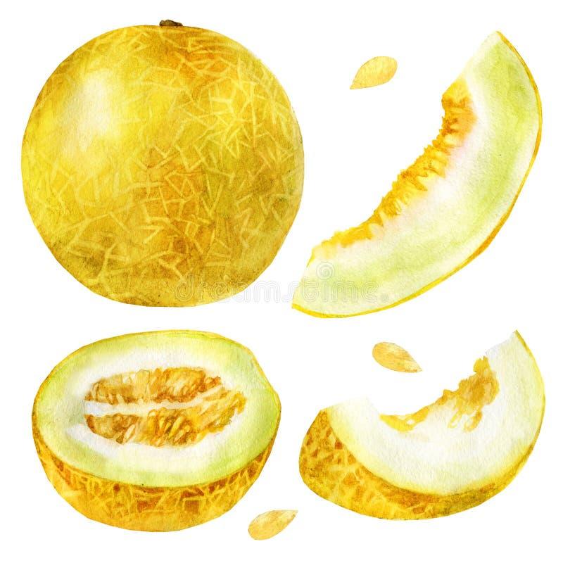 Ejemplo de la acuarela, sistema Melón, medio melón, un pedazo de melón, una rebanada de melón ilustración del vector